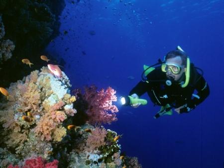 Intro Diving at Tiran Island