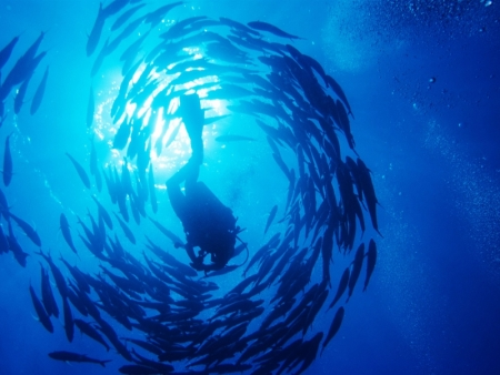 Introductory Scuba Dives in Sharm