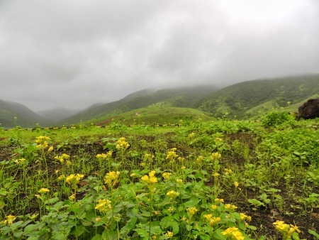 The Beauty f Dhofar