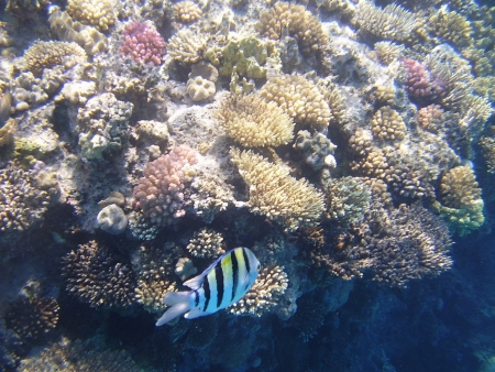 Colored Coral Reefs & Sea World in The Red Sea