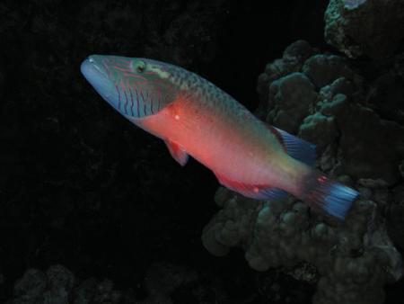 Aqaba Aquarium