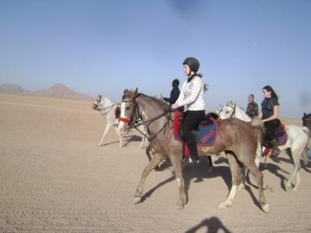 Horse Riding in Sharm Desert