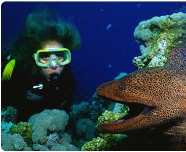 Scuba Diving in Red Sea - Egypt