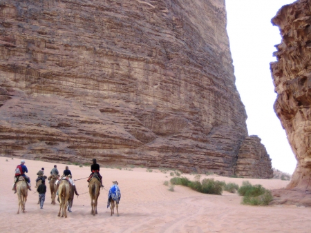 Riding Horses and Camels in Wadi Rum