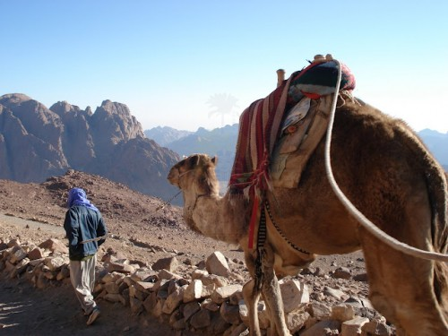 Camel Riding in Sinai Desert