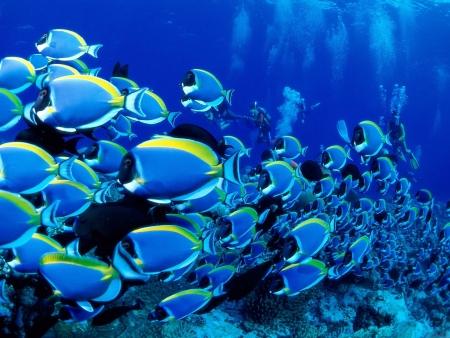 Pesci Multicolori