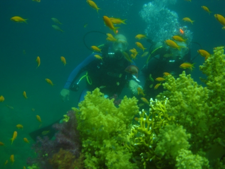 PADI Open Water Diving, Sharm