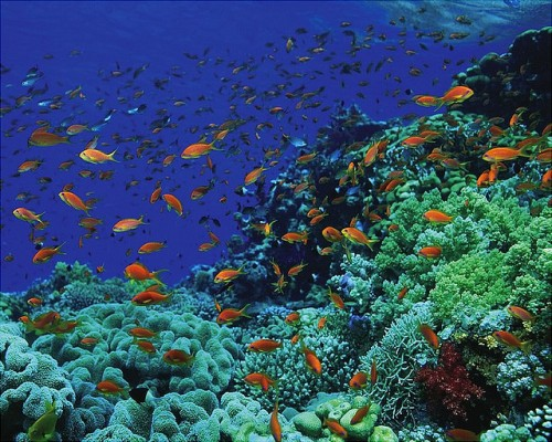 Coral Reefs and colorful fish at Ras Mohamed, Sharm