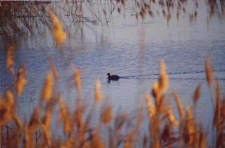 Fayoum Lake