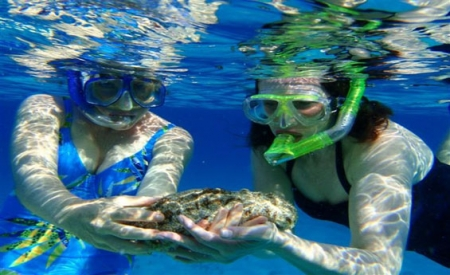 Snorkeling to Mahmya Island - Hurghada