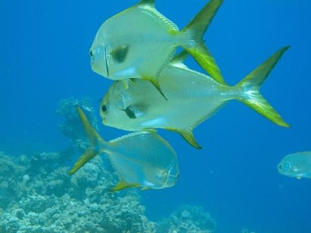 Marina Life at Red Sea Taba