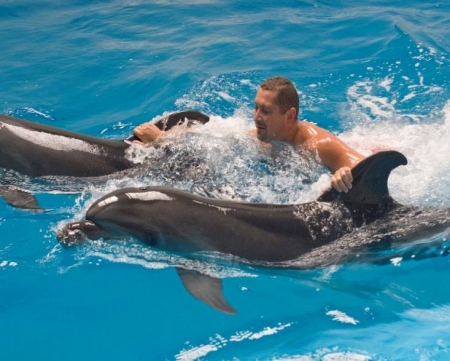 Hurghada Red Sea Dolphins