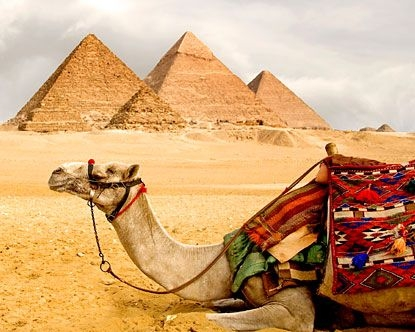 Beautiful Camel with The Tree Pyramids