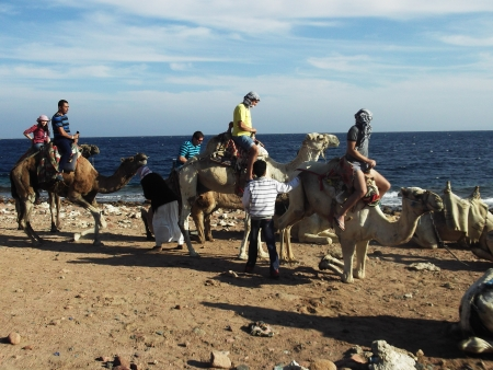 Experience of Camel Ride at Blue Hole, Dahab
