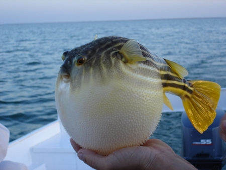 Special Fishing in Lake Nasser