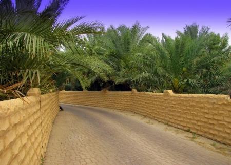 Oasi di Al Ain, Abu Dhabi