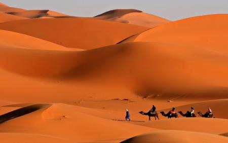 Cammellata a Sharm El Sheikh