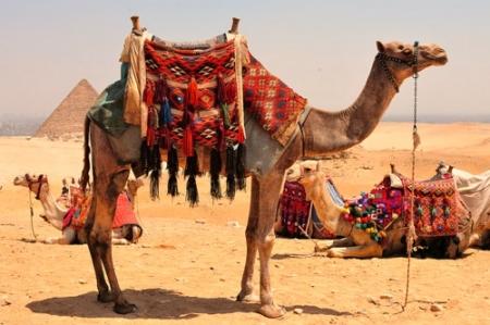 Camel Ride at Pyramids of Giza