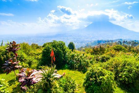 Wildlife Of Rwanda