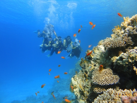 Red Sea Diving Experience, Sharm El Sheikh