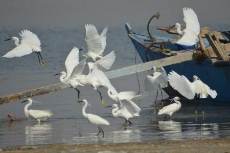 The Beautiful Nature of Lake Qaroun