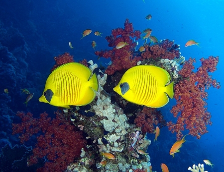 View of Life Under The Red Sea Egypt