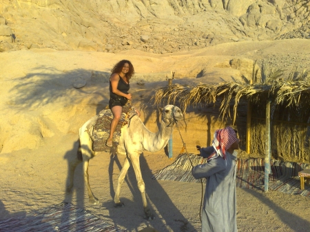 Camel Ride experience in Sharm Desert