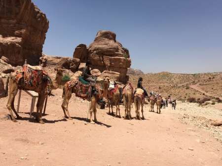 Group Tour : Petra and Wadi Rum Shore Excursion