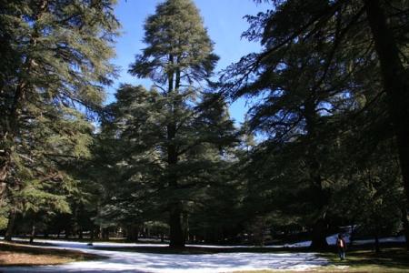 Día 4 : El bosque de cedros