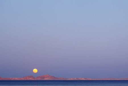 Tiran Island - Sharm