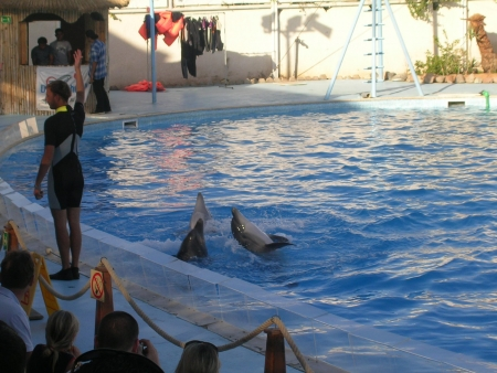 The amazing Dolphin Show