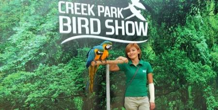 The Bird Show