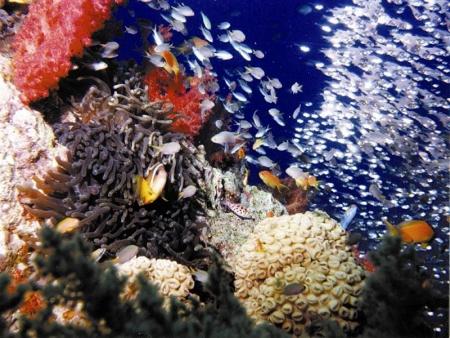 Peixes, Aqaba