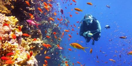 Atracciones en Sharm
