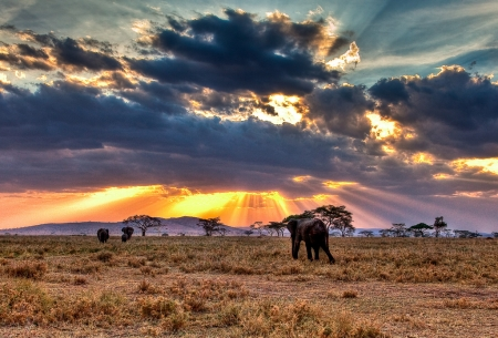 Highlights of Tanzania Safari