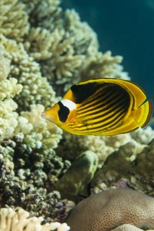 Snorkeling Isola Giftun da Safaga