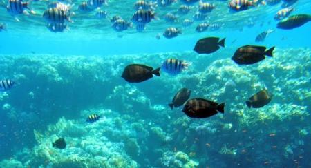 Sharm el Sheikh - Egito