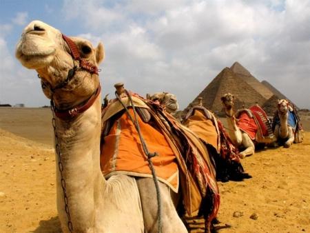 Camel Ride around Giza Pyramids, Egypt