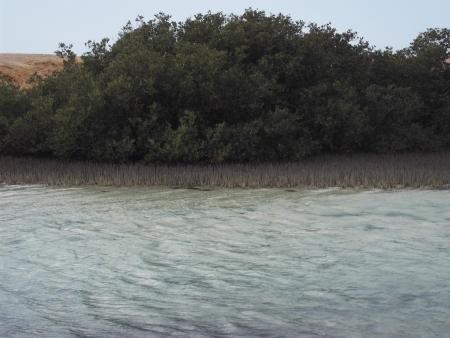 Ras Mohamed National Park, Red Sea