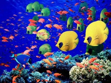 Los peces coloridos y al arrecife del coral.