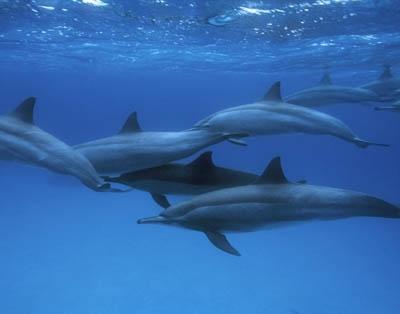 Satayh (Dolphin Reef) Snorkeling Trip