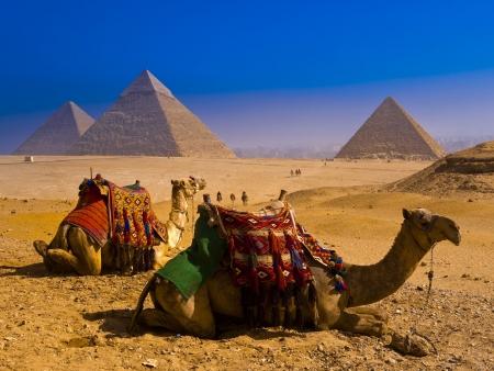 埃及小团体