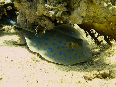 Marine Life in Ras Mohamed National Park