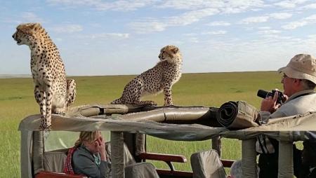 Kenya Zebra Safari Express