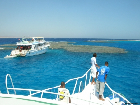 Snorkeling at Dolphin House, Marsa Alam