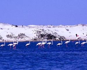 Shores of Al Wusta Region of Oman