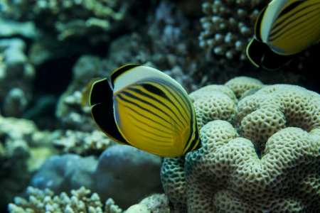 Underwater in El Gouna