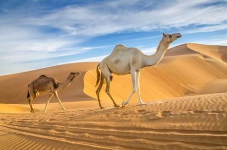 Oman Da Visitare