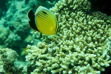 Soma Bay Resort, Red Sea