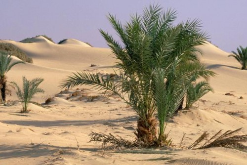 Dakhla Oasis at the Western Desert